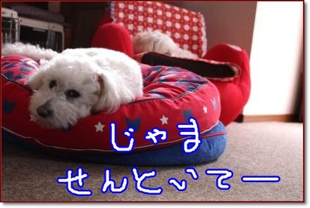 Eos_kiss_x21204240569_430