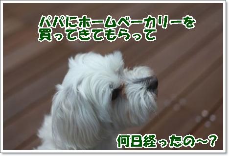 Eos_5d_mark_ii1205060781_450
