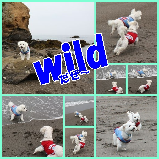 Wild2_3