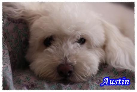 Au1_450