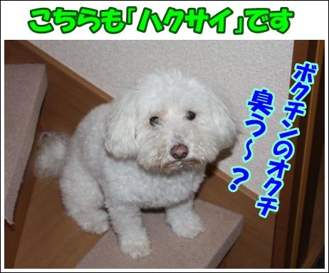 Aa_450