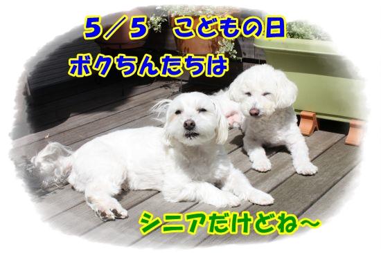Eos_kiss_x21605056607_550